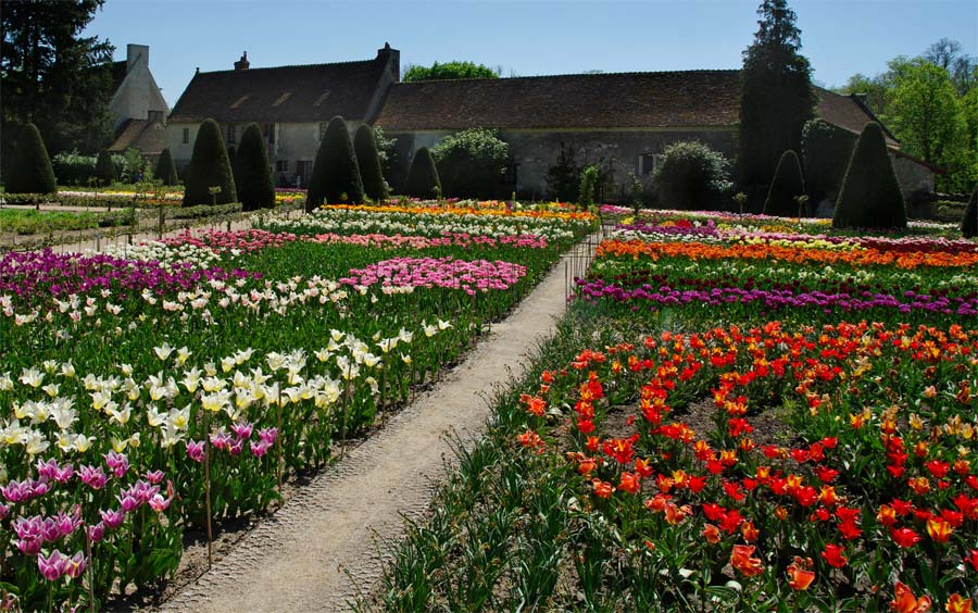 Tulips at Chateau Chenonceau in France