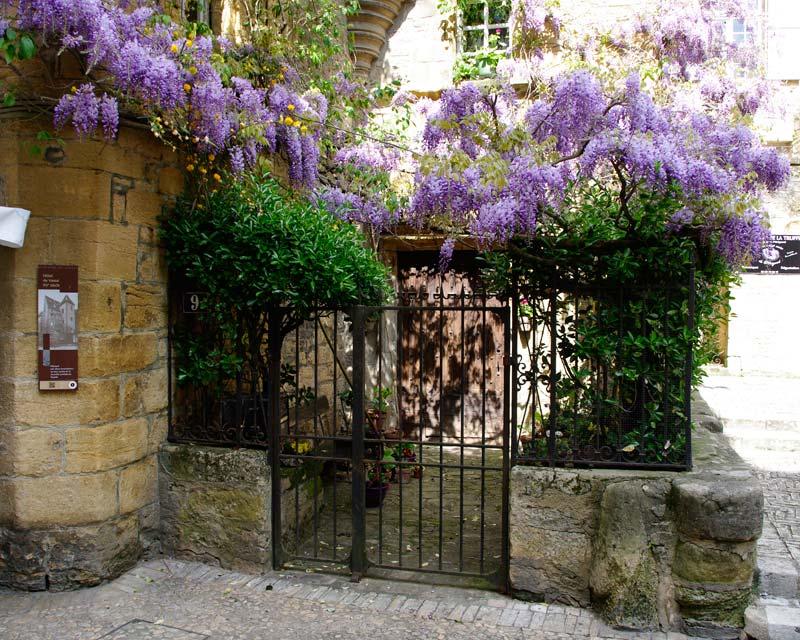 Wisteria sinensis - as seen in springtime in Sarlat, Dordogne, France