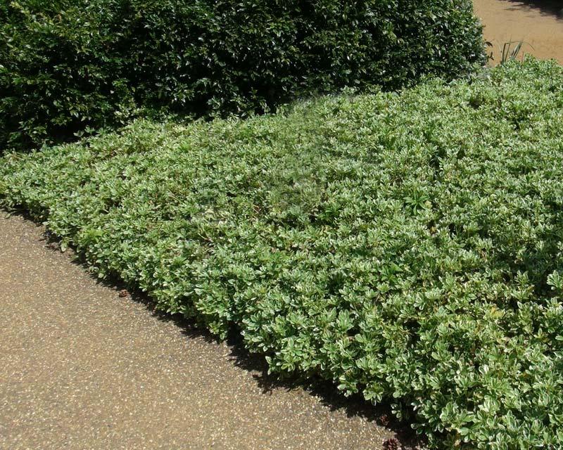Shade Gardens Zone 5