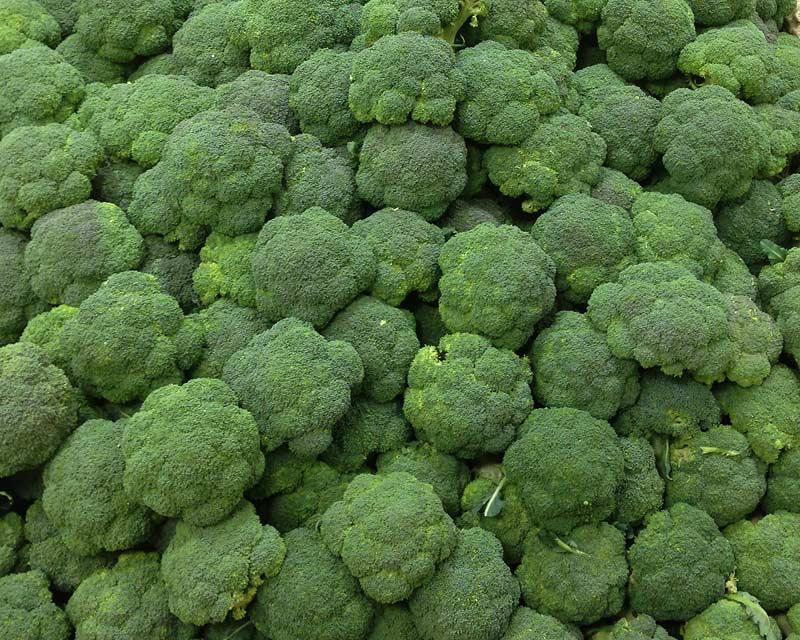 Brassica oleracea Cymosa Group - Broccoli