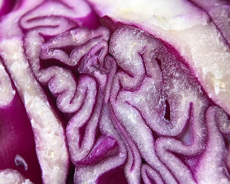 Brassica oleracea Capitata Group, Red Cabbage
