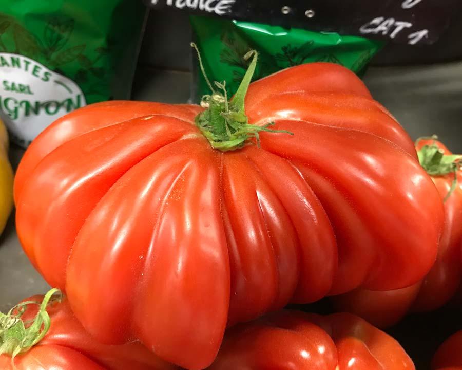 Lycopersicon esculentum Oxheart, Coeur de Boeuf - Large irregular shape tomatoes