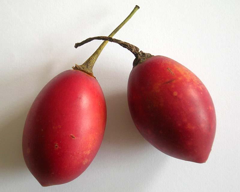Solanum betaceum syn Cyphomandra betacea - the ripe reddish purple fruit Tamarillo photo janek2005