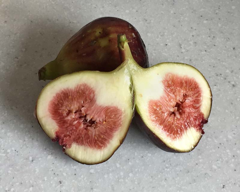Common Fig - fresh figs are often served with cheese.