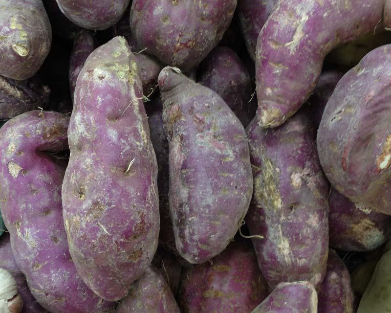 Resultado de imagen para Ipomoea batata