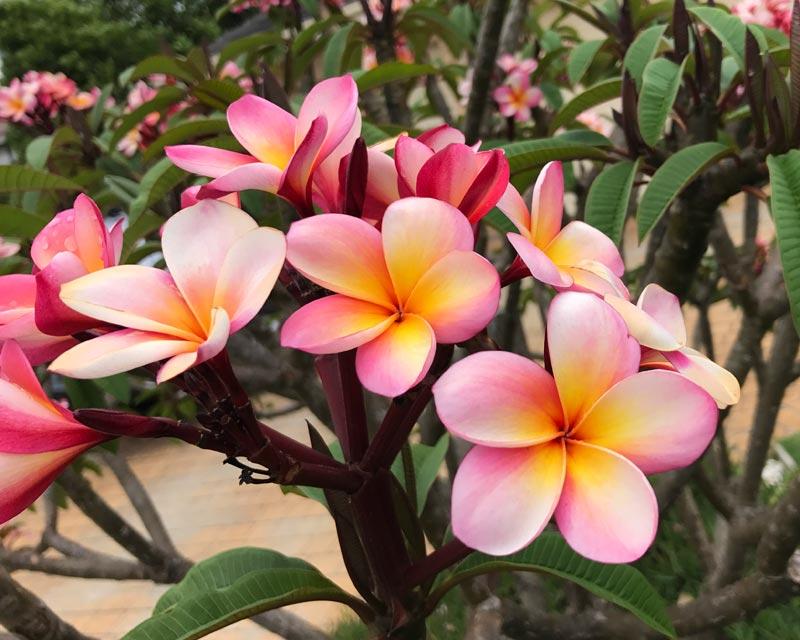 Gardensonline plant finder for Plantas exoticas online
