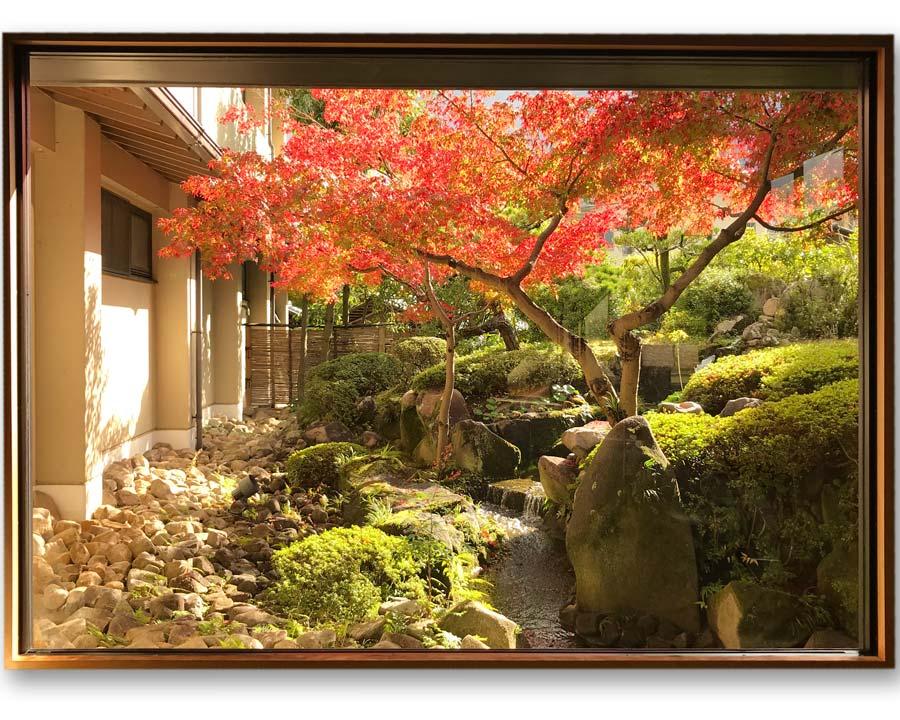 Acer palmatum through a window in Horoshima