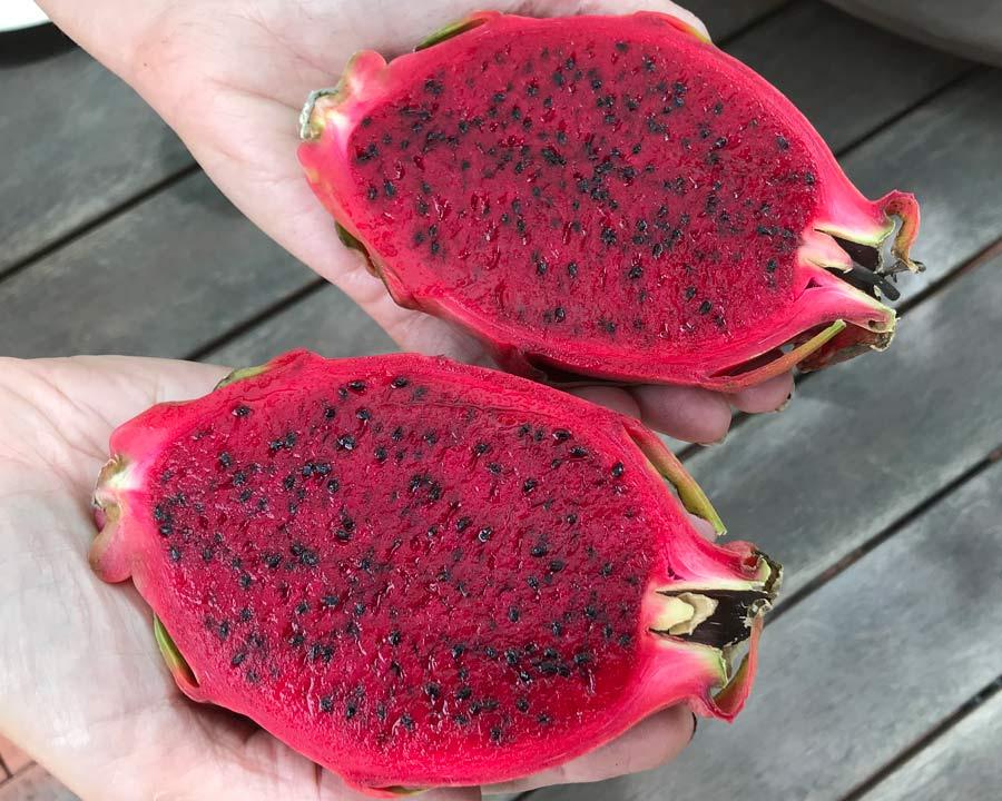 Hylocereus undatus - Dragon fruit - Red flesh speckled with black seeds.  Some varieties have white flesh