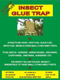 Insect Glue Trap - the pack
