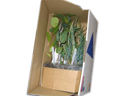 A sample selection of native plants at tube-stock size - packed in a batch of 16 for secure post.