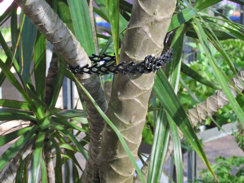 Rapstraps - so good for plants