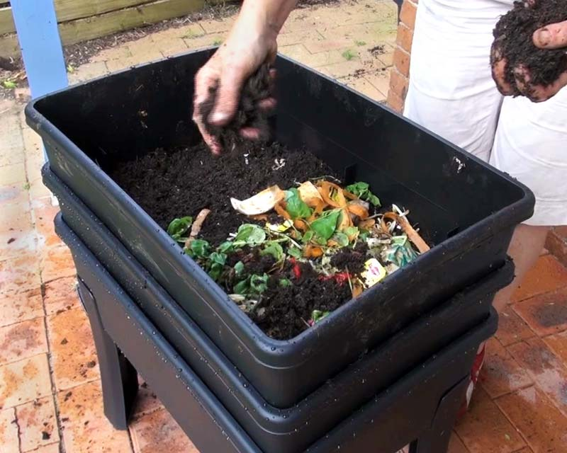 Worm Cafe - add worms, then feed with kitchen scraps