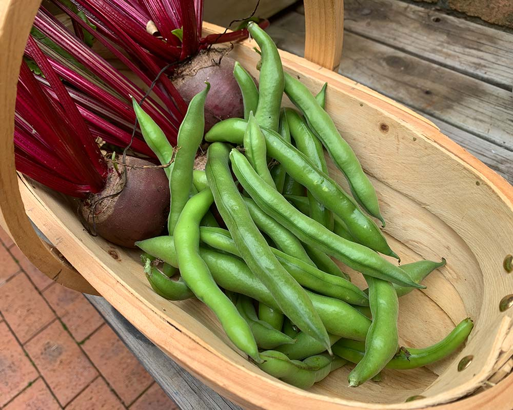 Wooden Garden Trug by Burgon and Ball - perfect for harvested vegetables