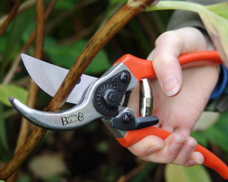 Bypass Secateurs plus spare blade & spring - Burgon & Ball
