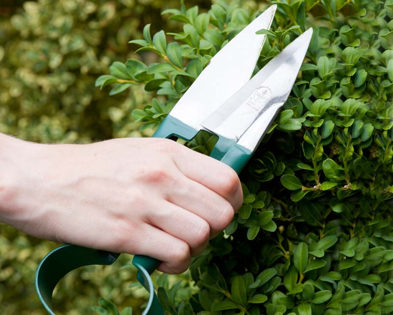 Easy to use topiary trimming shears
