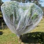 Fruit Saver Net <b>Backorder</b>