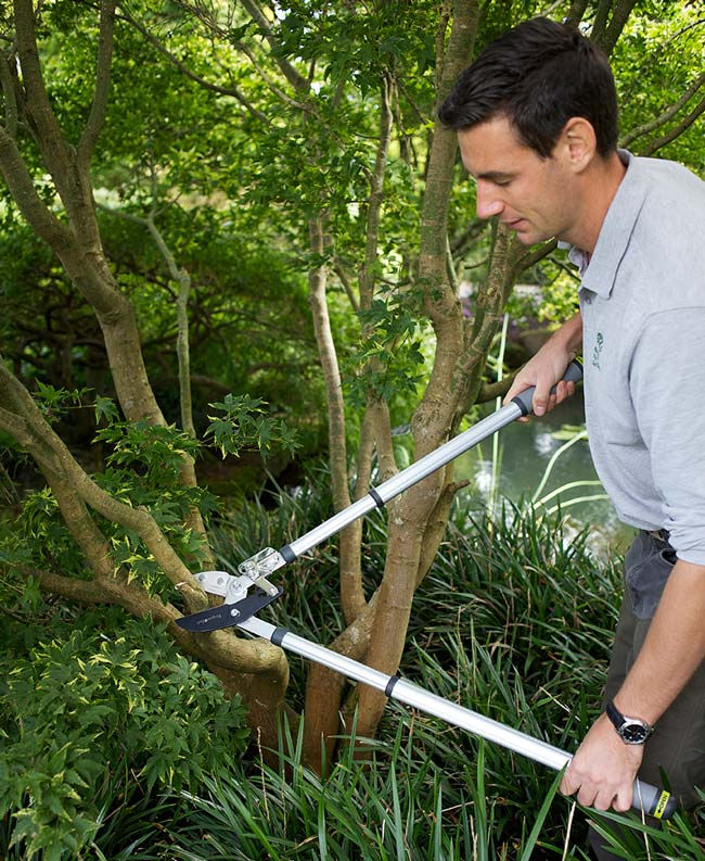 Telescopic Ratchet Loppers - RHS Endorsed by  Burgon and Ball