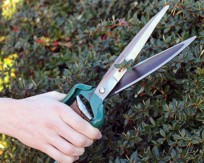 Burgon and Ball Shrub Shear - makes hedge trimming a breeze