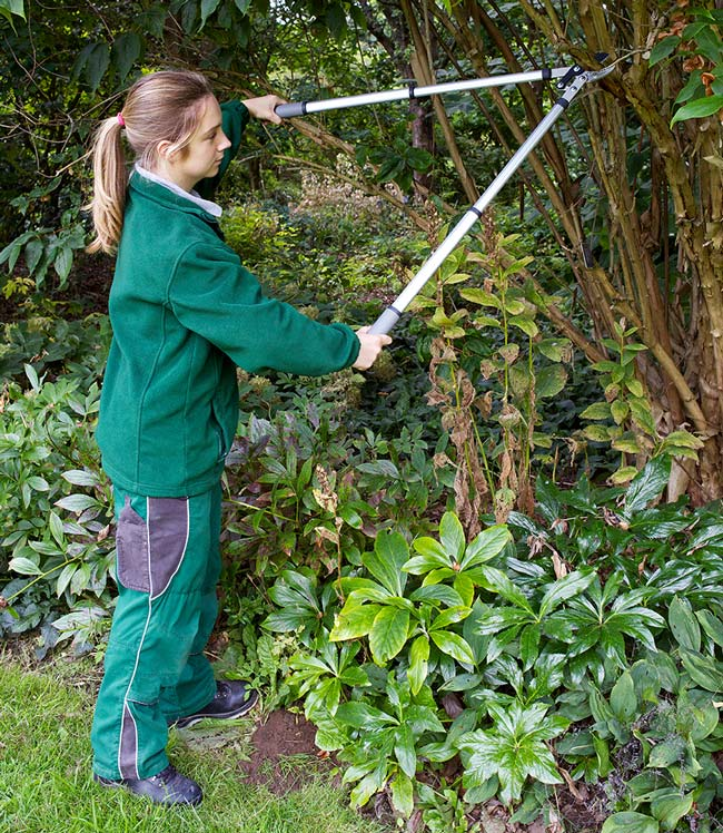 Telescopic Handled Anvil Lopper by Burgon and Ball and RHS endorsed
