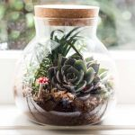 Little Glass Garden Kit - Terrarium
