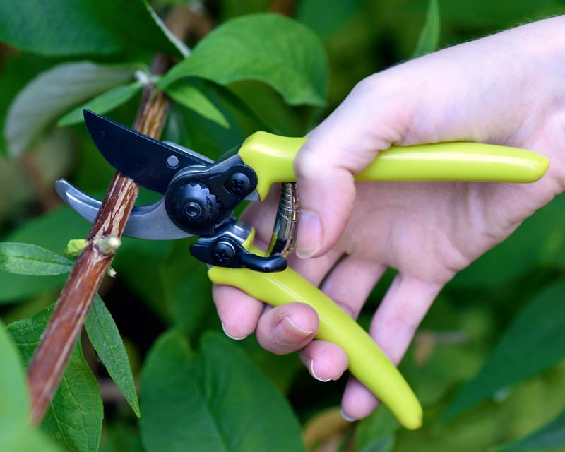 Micro secateurs, green - Burgon and Ball
