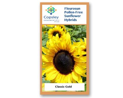 FleuroSun Classic Gold by Copsley Ornamentals