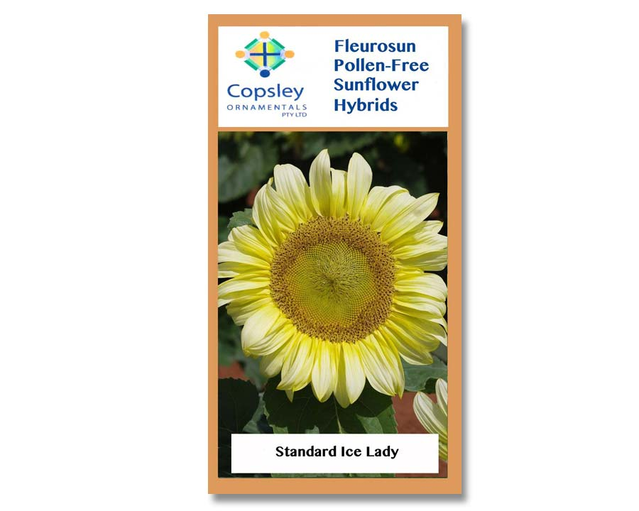 FleuroSun Standard Ice Lady by Copsley Ornamentals
