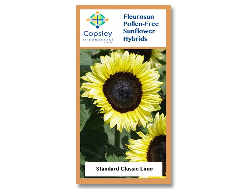 FleuroSun Standard Classic Lime by Copsley Ornamentals