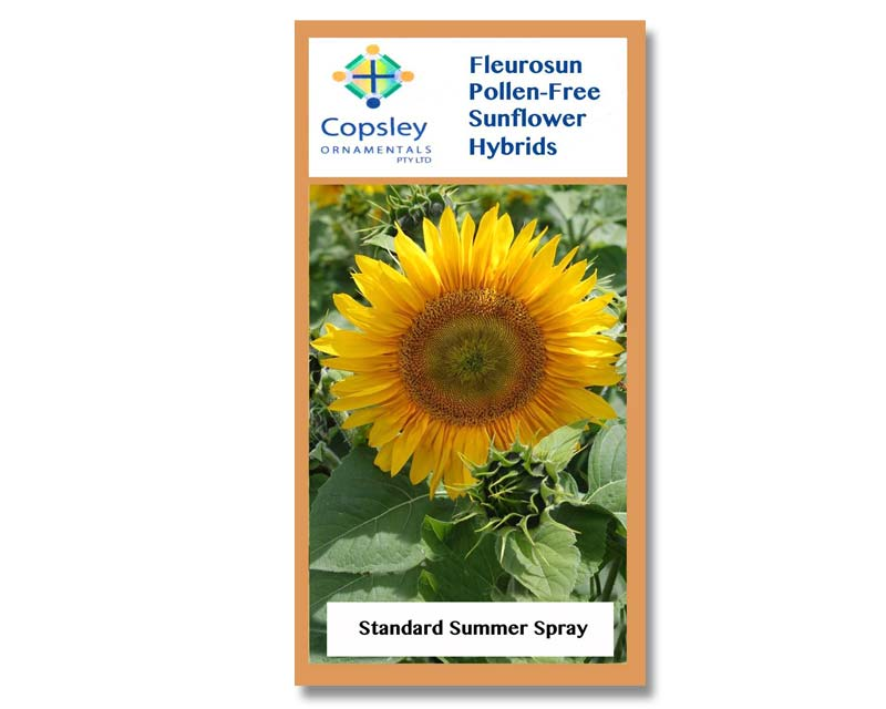 FleuroSun Standard Summer Spray by Copsley Ornamentals