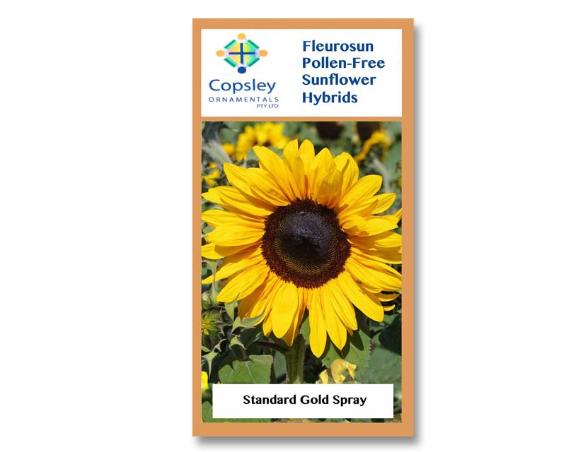 FleuroSun Standard Gold Spray by Copsley Ornamentals