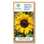 Gold Spray FleuroSun Sunflower Seeds