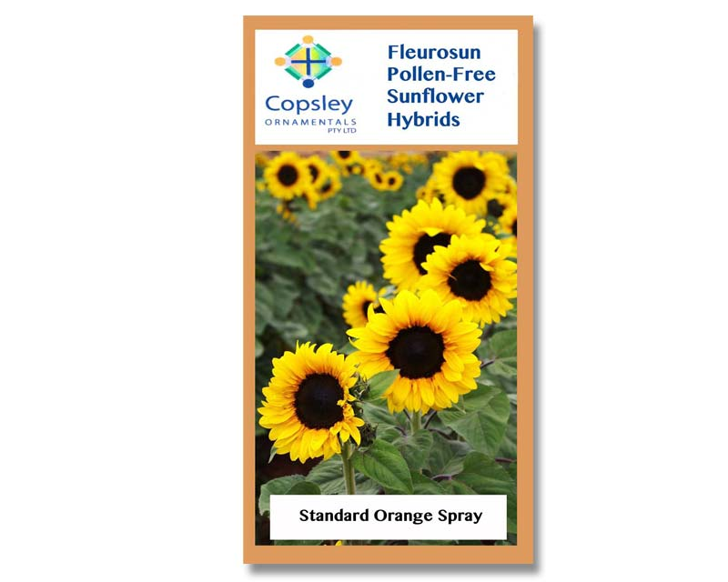 FleuroSun Standard Orange Spray by Copsley Ornamentals