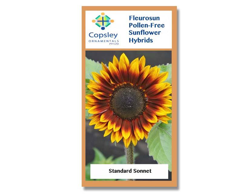 FleuroSun Standard Sonnet by Copsley Ornamentals