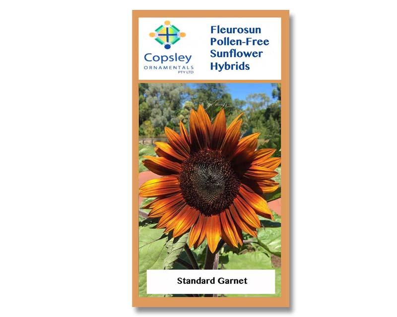 FleuroSun Standard Garnet by Copsley Ornamentals