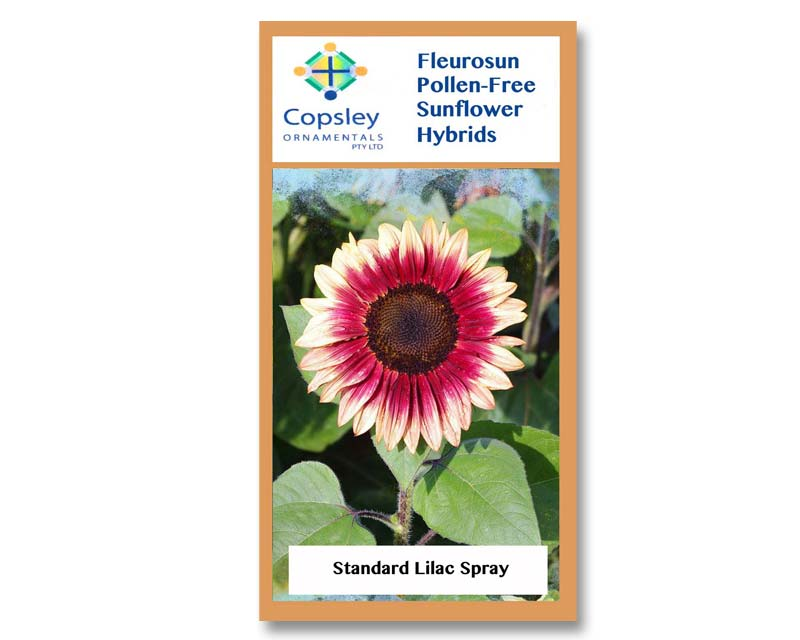 FleuroSun Standard Lilac Spray by Copsley Ornamentals
