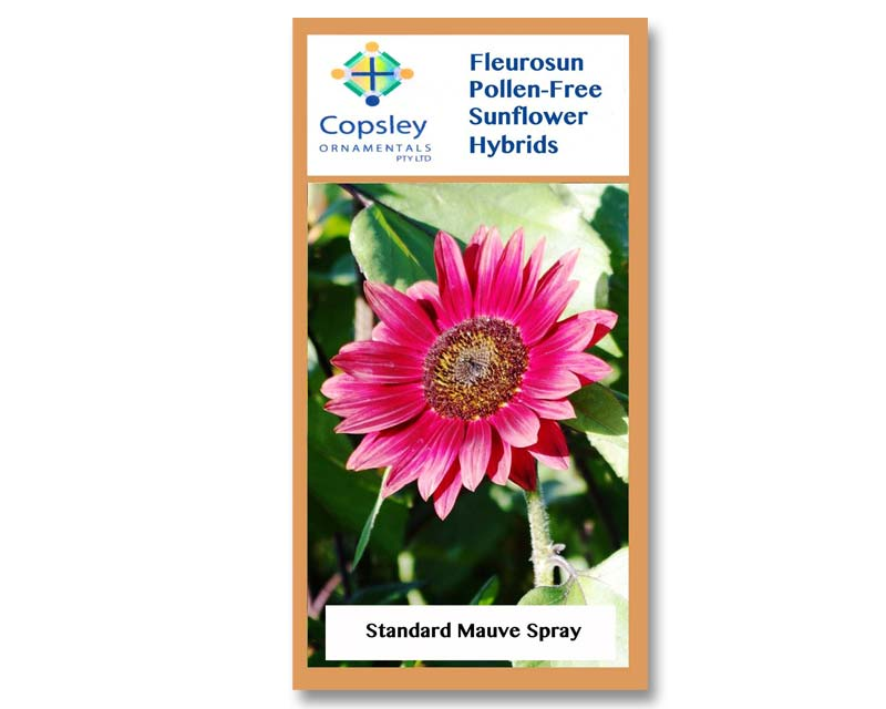 FleuroSun Standard Mauve Spray by Copsley Ornamentals