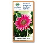 Mauve Spray FleuroSun Sunflower Seeds