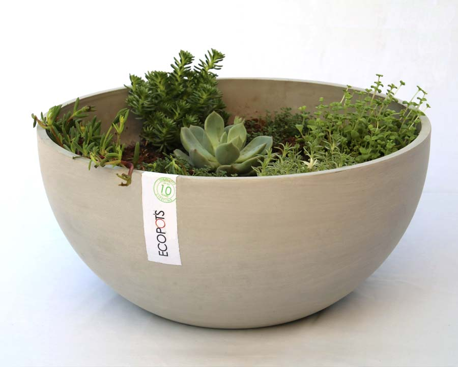 Ecopots - Brussels in White Grey  - perfect for small succulents