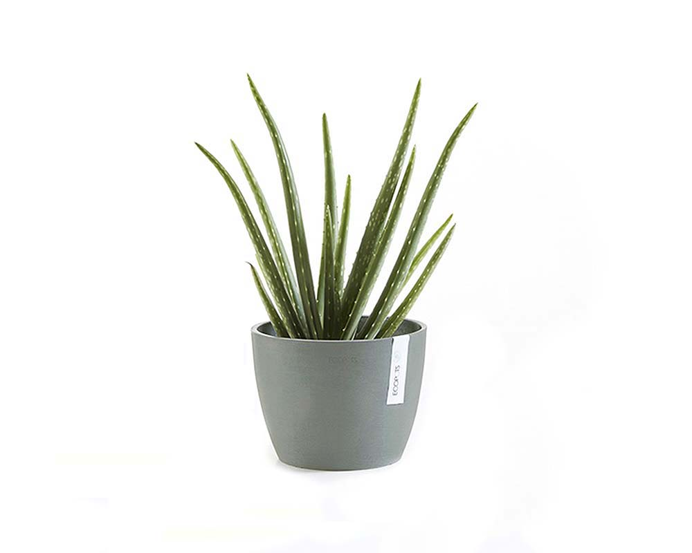 Stockholm EcoPot in Blue Grey with Aloe