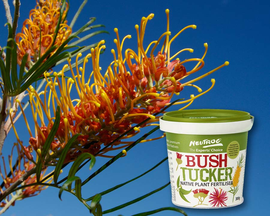 Bush Tucker - for natives