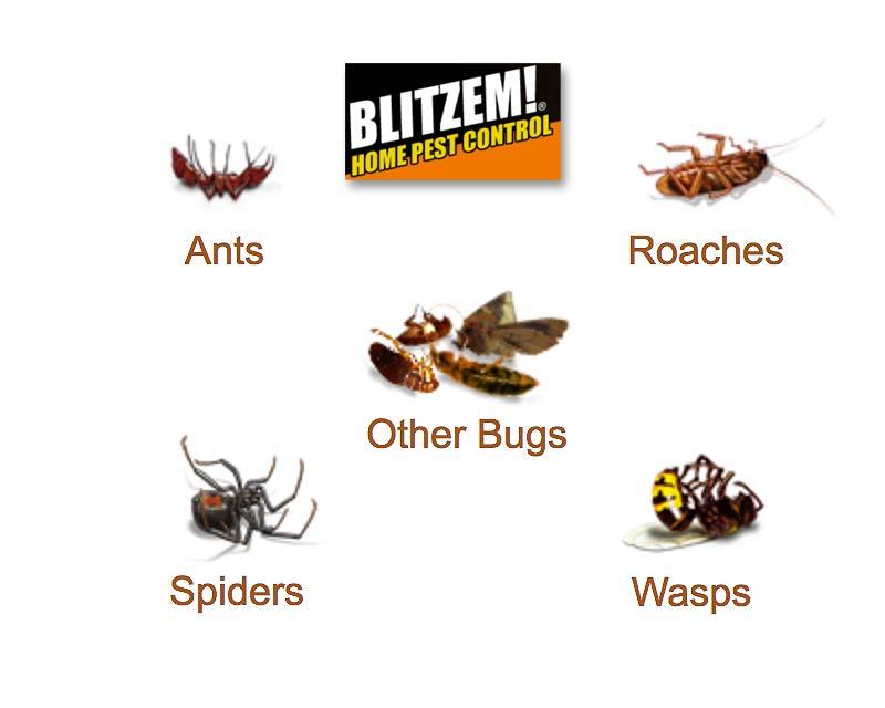 Blitzem Insect Killer