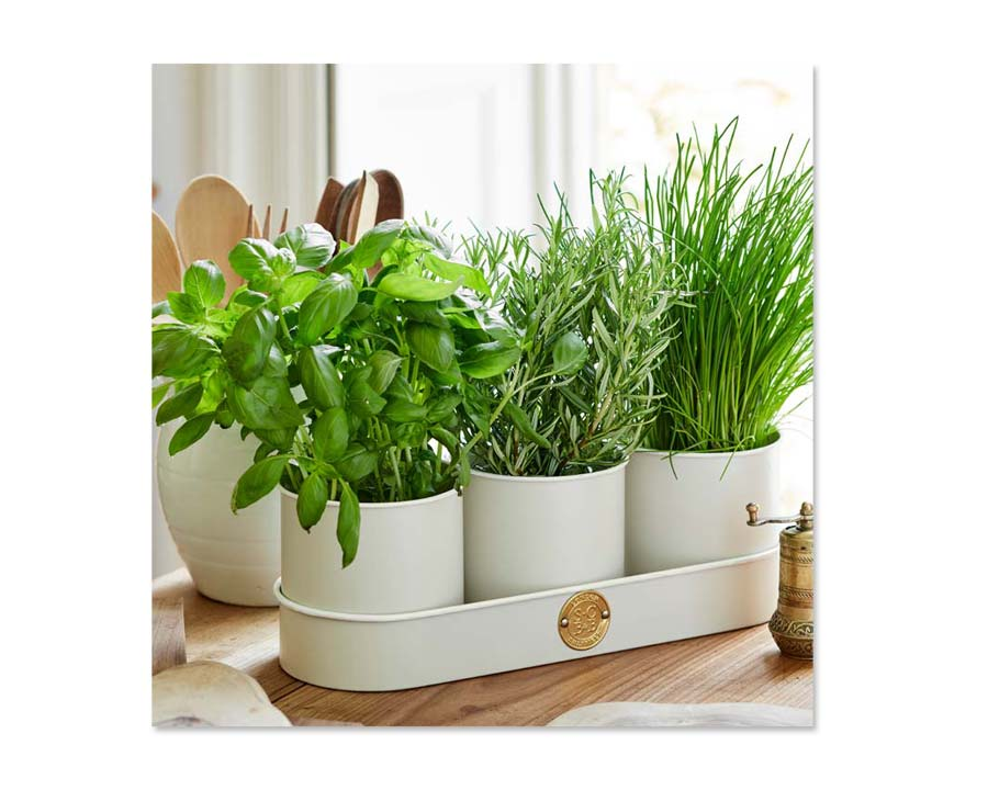 Herb Pots in Buttermilk by Sophie Conran