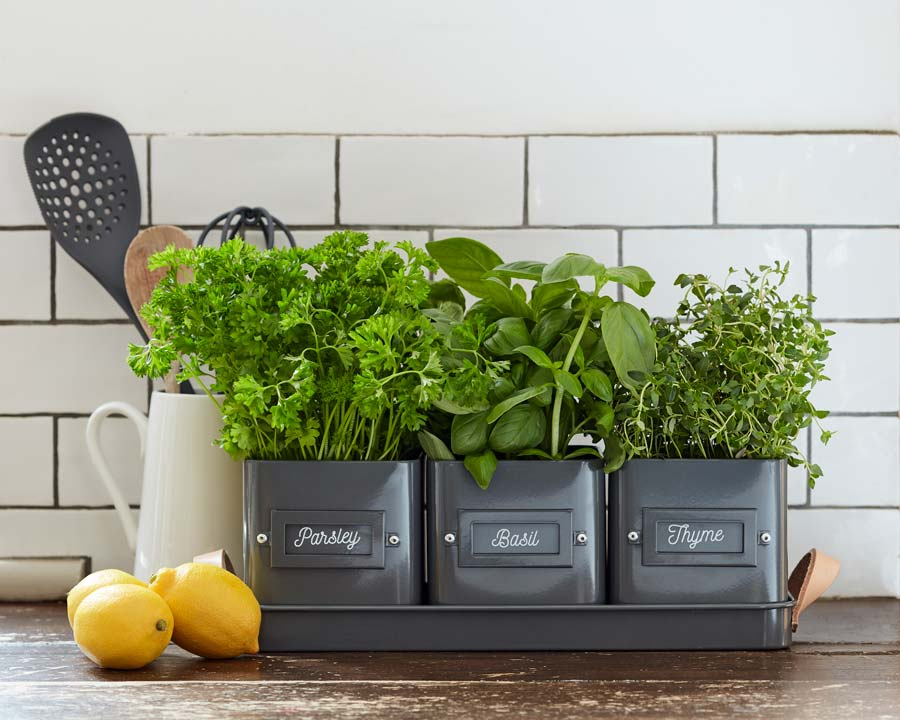 Set of 3 herb pots on matching tray by Burgon and Ball perfect for growing herbs in your kitchen
