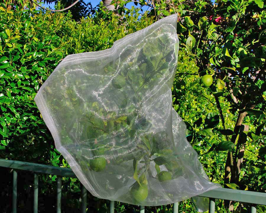 Fruit Saver Drawstring Mesh Bags are perfect for protecting single branches of fruit