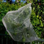 Fruit Saver Drawstring Mesh Bags <b>Backorder</b>