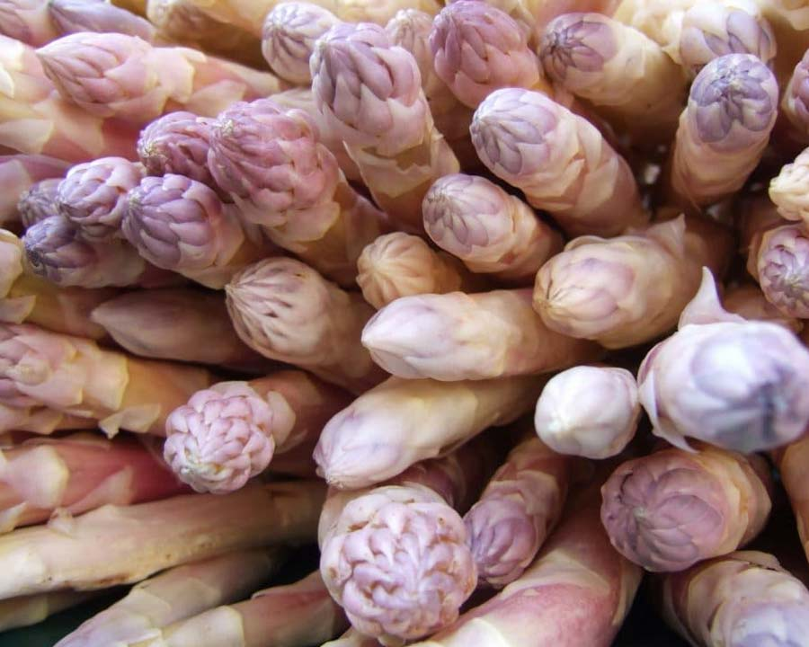 Asparagus Argenteuil - a French heirloom strain of this nutritious vegetable