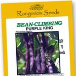 Bean Climbing Purple King - Rangeview Seeds