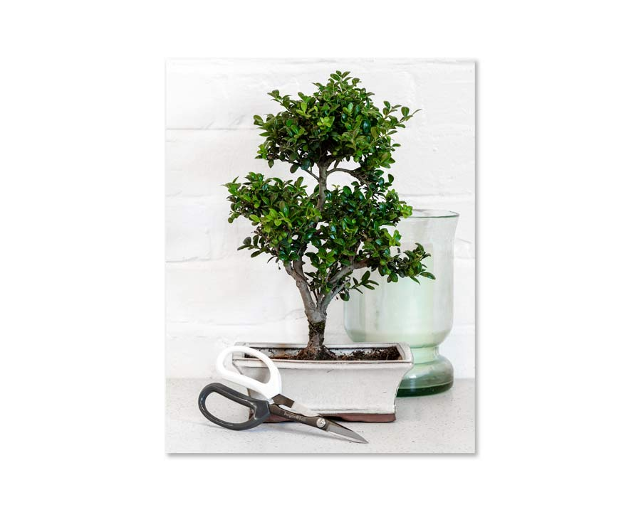 Japanese Pruning scissors - perfect for looking after Bonsai trees and indoor plants