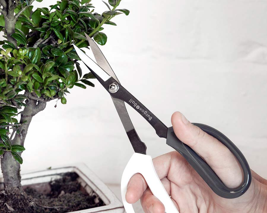 Japanese Pruning Scissors are designed for pruning a maintenance of bonsai trees. Can also be useful for other indoor plants