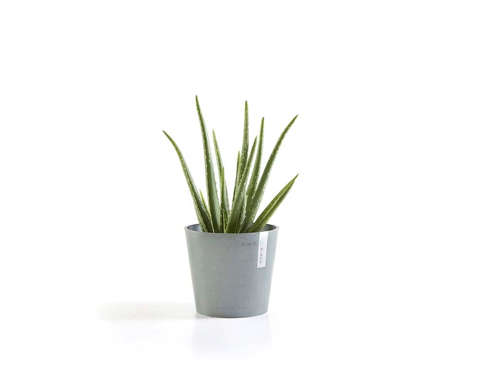 Blue Grey - Amsterdam Mini Succulent Pot - EcoPots